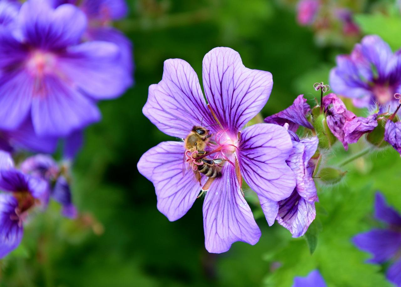 Homeopátia kedvenceinknek - homeopátiás gyógymód